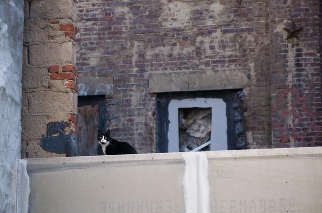 A city cat.