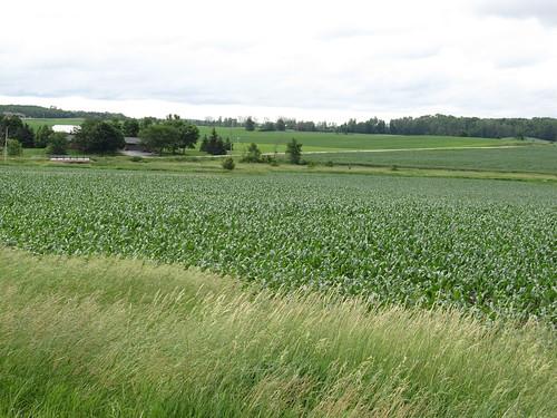 Wisconsin Landscape, Door Peninsula, Wisconsin