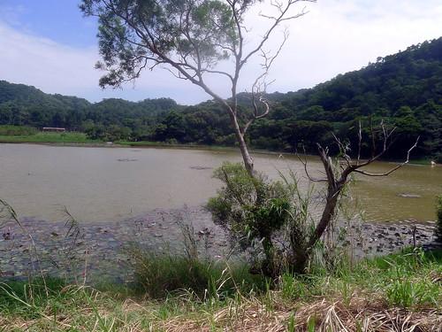 東源村的池塘