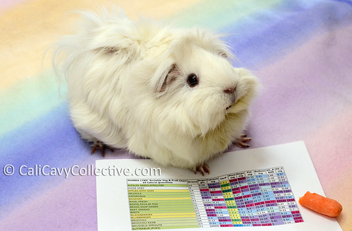 Guinea pig Abby-Roo with nutrition chart food list