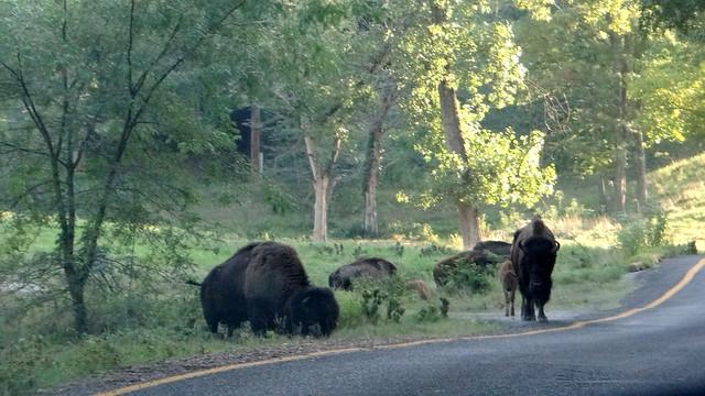 45 240813 Lone Elk Park
