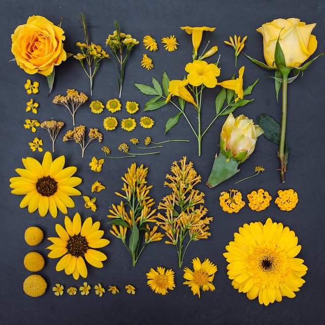 the garden collection