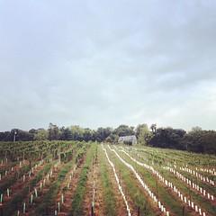 Climbing vines.