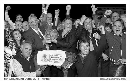 Shelbourne Park Greyhound Stadium: Irish Greyhound Derby Winner2013: Slippery Robert