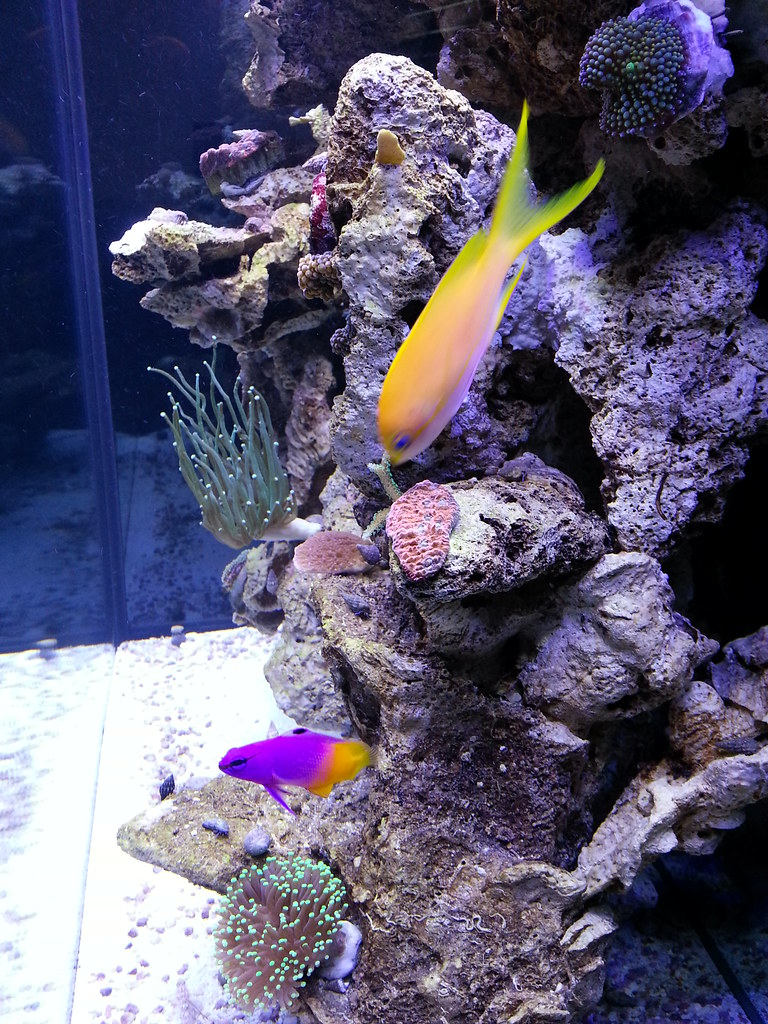 Freshwater fish tank alkalinity - I Will Update This Thread As Things Progress But So Far So Good Every Water Parameter Is Perfect Except My Alkalinity Is 12 6 Which Is A Little High