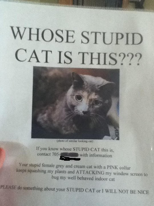 WHOSE STUPID CAT IS THIS?