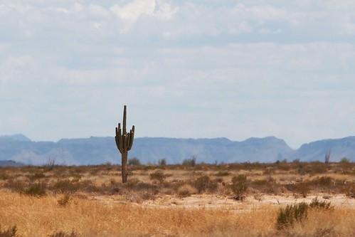 arizona landscape vegetation saguaro arid sonorandesert southwesternunitedstates lonesome i8 saguarocactus desertsouthwest interstate8 desertscene