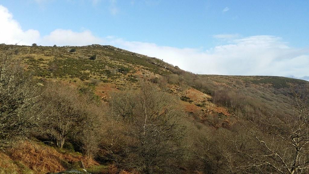 Mel Tor #sh #dartmoor