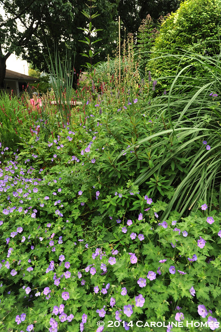 Flowering perennials and grasses