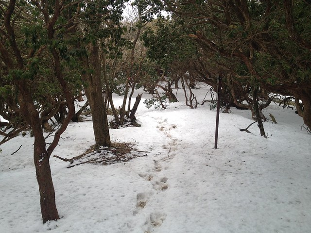 入道ヶ岳 イワクラ尾根 登山道