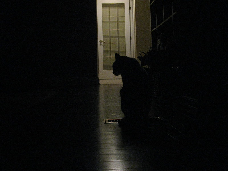 Silhouette shot of my cat