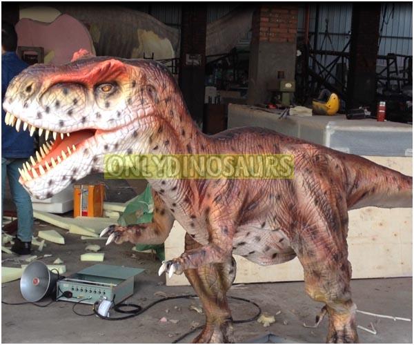 Little Tyrannosaurus Rex Model