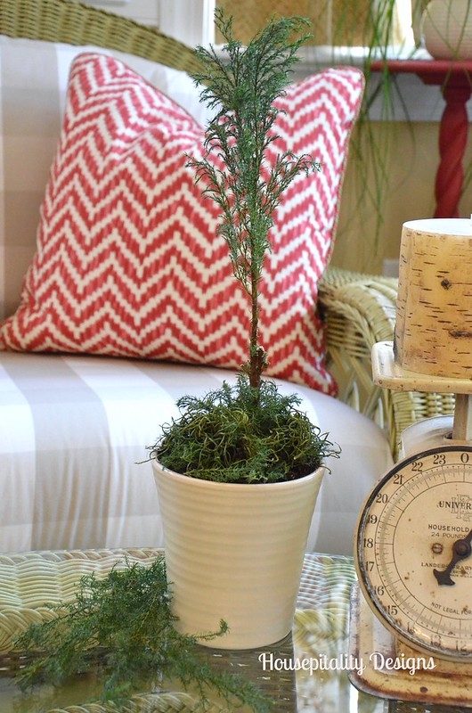 Dried Cedar Tree/Topiary-Housepitality Designs