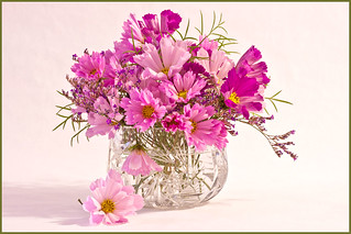 Pink Cosmo Flowers Arrangement