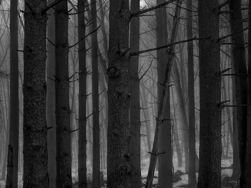 trees mist snow fog landscape landscapes connecticut newengland ct environment edwaste edsteinerts