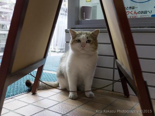 近所の猫 02