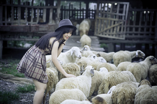 Quynh Vs Sheeps