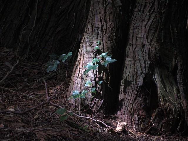 Forest Floor in Languedoc