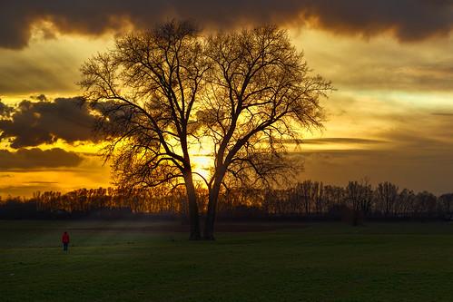 trees sunset sun plant tree nature germany deutschland europa europe sonnenuntergang dusk natur pflanze location sonne bäume baum badenwürttemberg hundewiese hemsbach