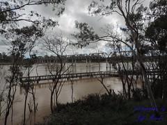 Burnett River below minor flood level. 2mts 10am