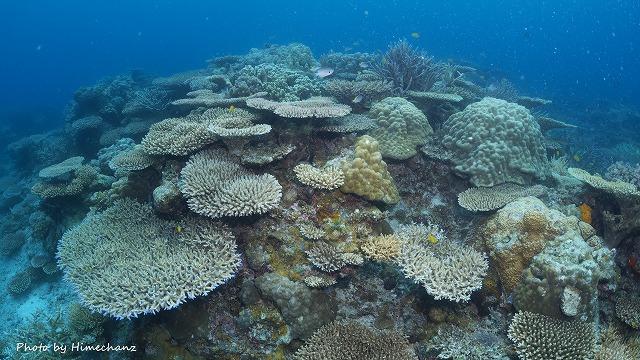 石垣島のサンゴをいっぱい堪能していただきました♪