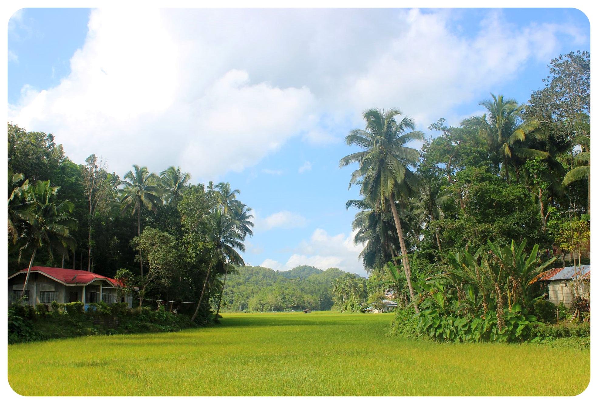 bohol scenery
