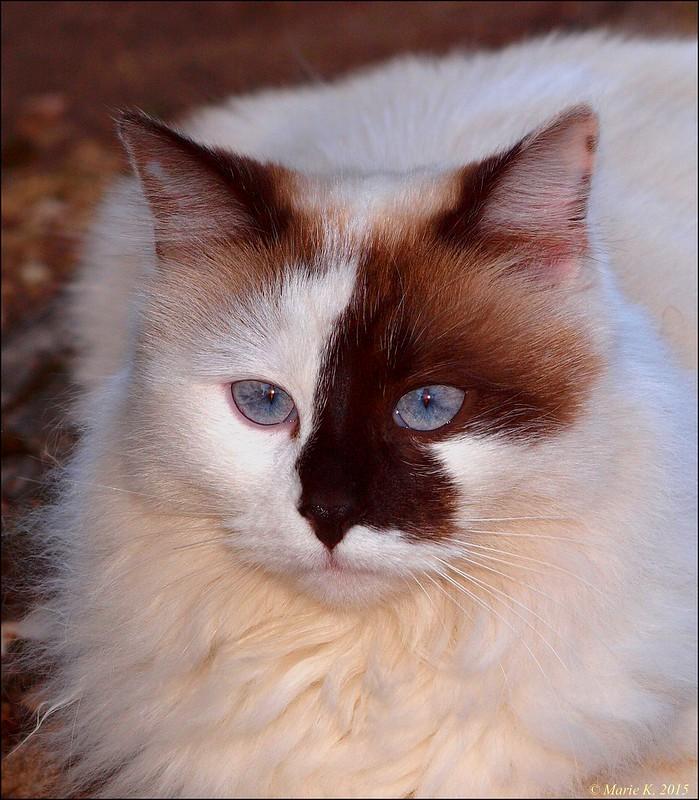 Les yeux bleus  16828050906_8d3ecfa103_c