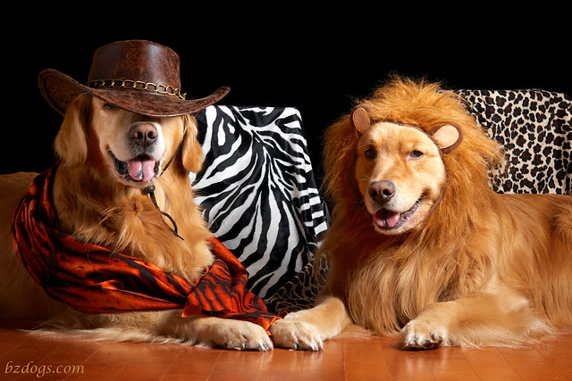 Lion Hunting?