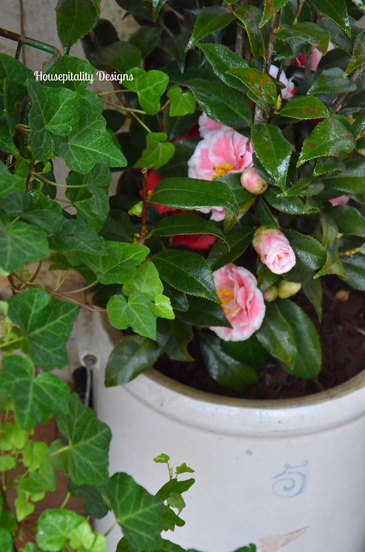 Camellias in Vintage Red Wing Crock-Housepitality Designs