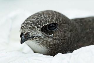 bird05