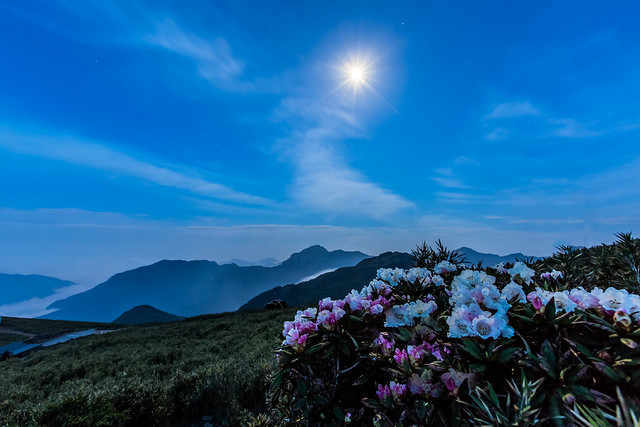 Moon Light above Clouds 花樹參差山月出