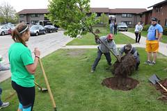 tree-planting-18