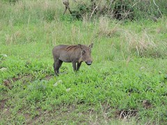 8721831778 29bfd66995 m The best vacation and best experience. Thomson Safaris Review: Ed & Karen B.