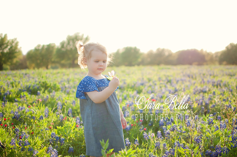 Bluebonnets-100-1web