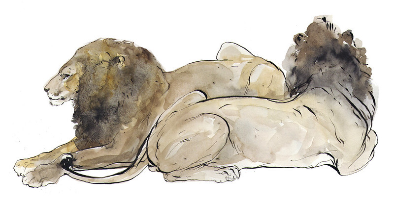 lion (asian)