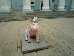 lexington pig