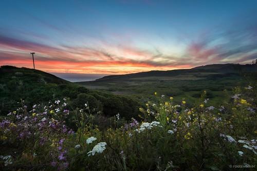 sunset santacruz spring wildflowers mountainbiking californiacoast