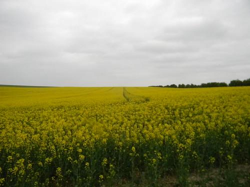 Big Yellow field