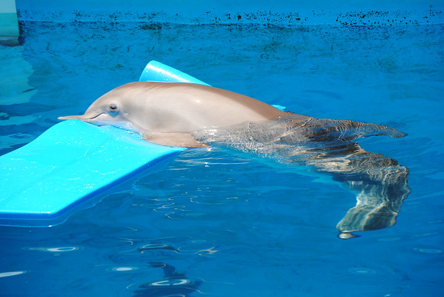 Winter the Dolphin...Clearwater Aquarium | Flickr - Photo ...