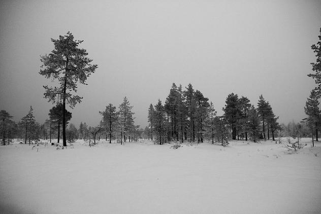 arboles-artico-diarioecologia