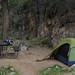 Bright Angel Campground by angelatravels11