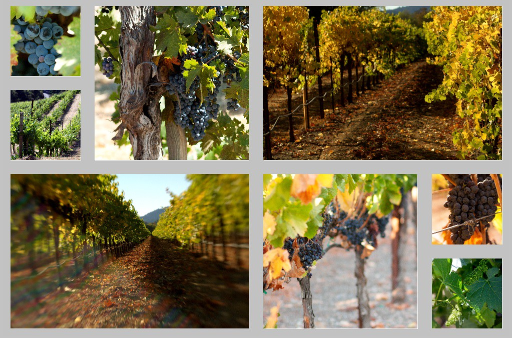Wine_Wall