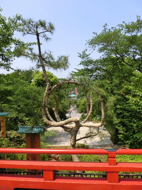 上野公園/Ueno Park