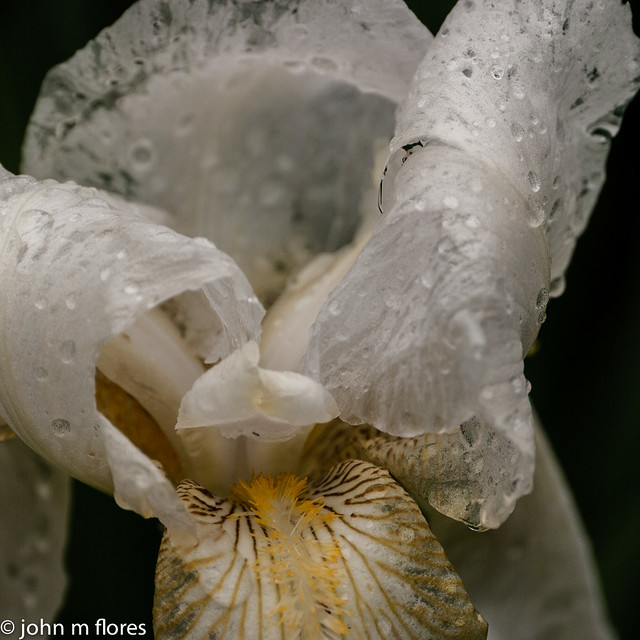 Flowers + Rainy Day = Rainy Day Flower Photos