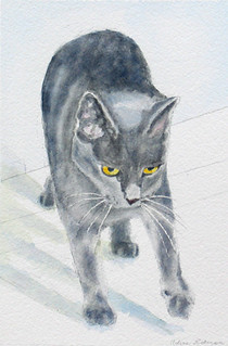 cat_shena_rgb_4in
