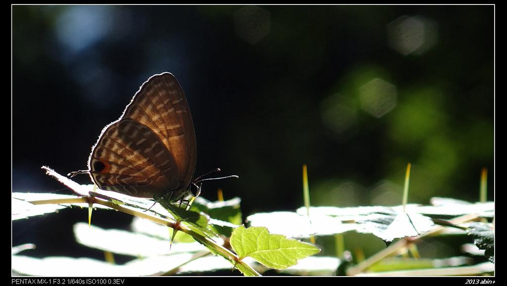 MX-1 拍蝴蝶