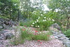 Salvia x Jamensis + Mme Hardy
