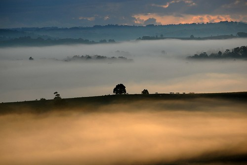 morning nature animals fog sunrise landscape countryside scenery day australia nsw northernrivers morninglandscape australianweather wilsonsrivervalley