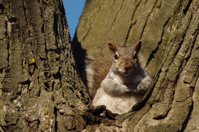 Squirrel Posing by Doundounba