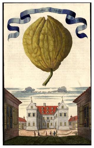 007-Nürnbergische Hesperides-1708-1714- Universitäts- und Landesbibliothek Sachsen-Anhalt